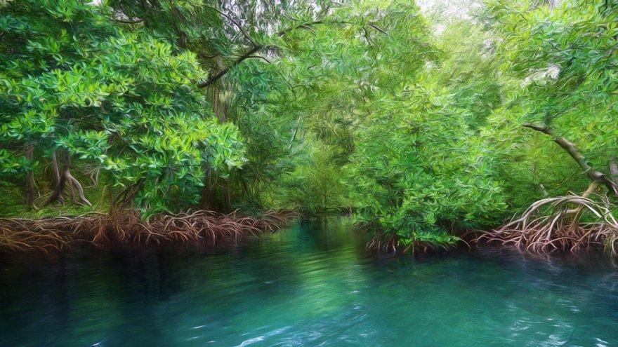 Manglar, Los Haitises National Park, Bird Island, República Dominicana