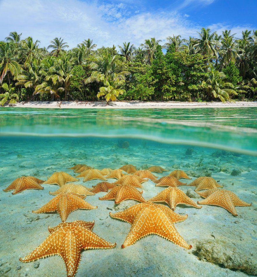 comprar estrellas de mar en Punta Cana
