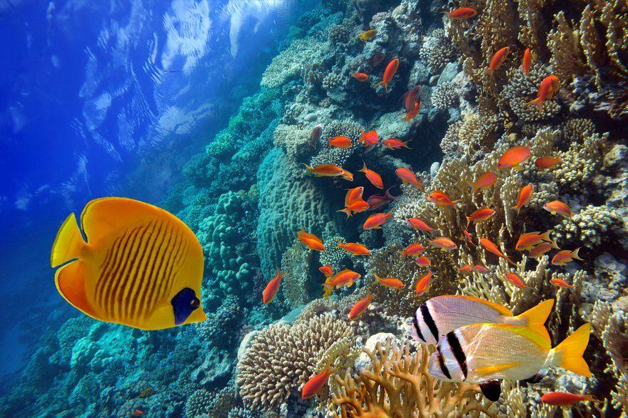 Comprar productos del mar en Punta Cana