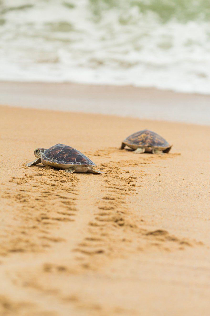 Historia del Santuario de tortugas marinas de Isla Saona