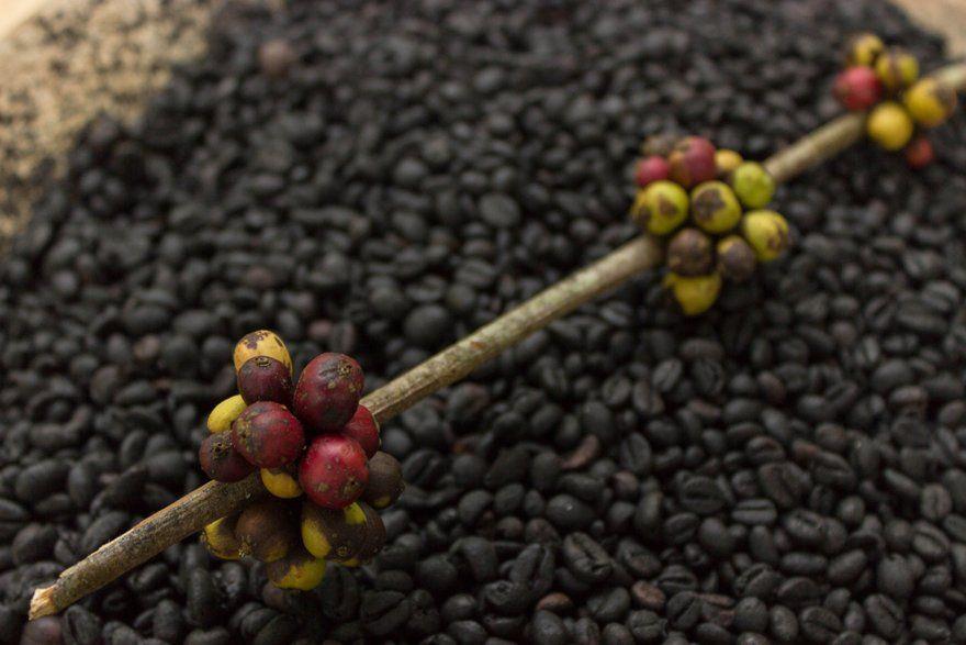 café en Punta Cana