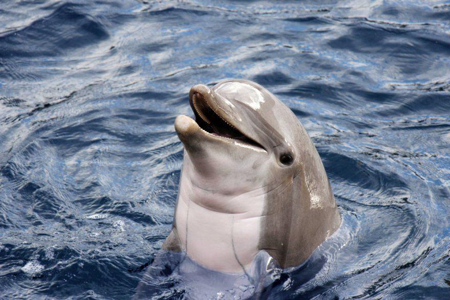 Nadar con delfines punta cana
