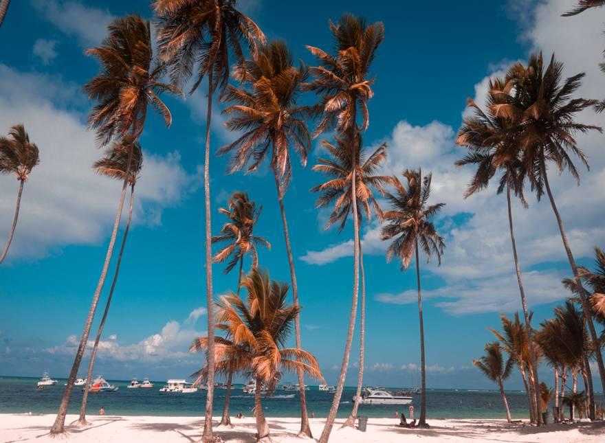 palmeras en el caribe
