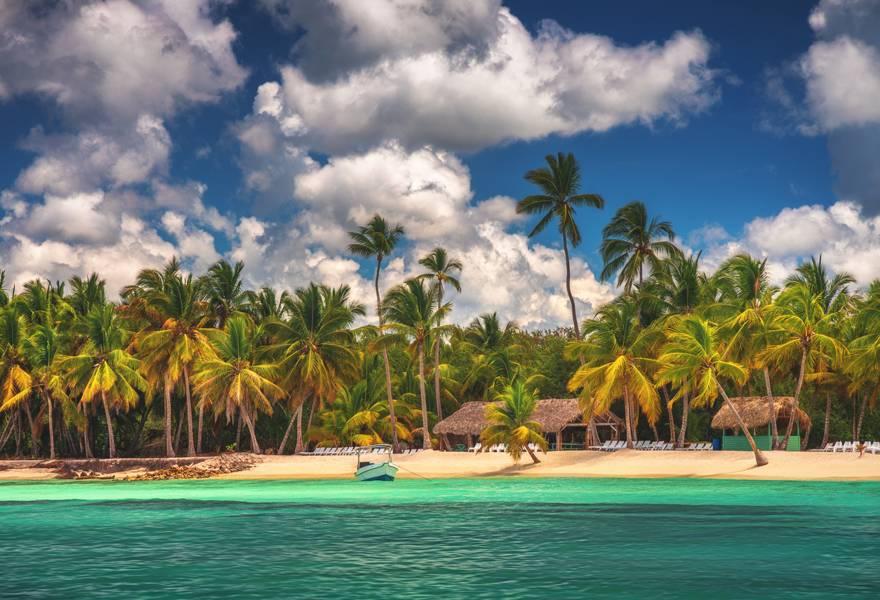 Palm trees on Saona Island