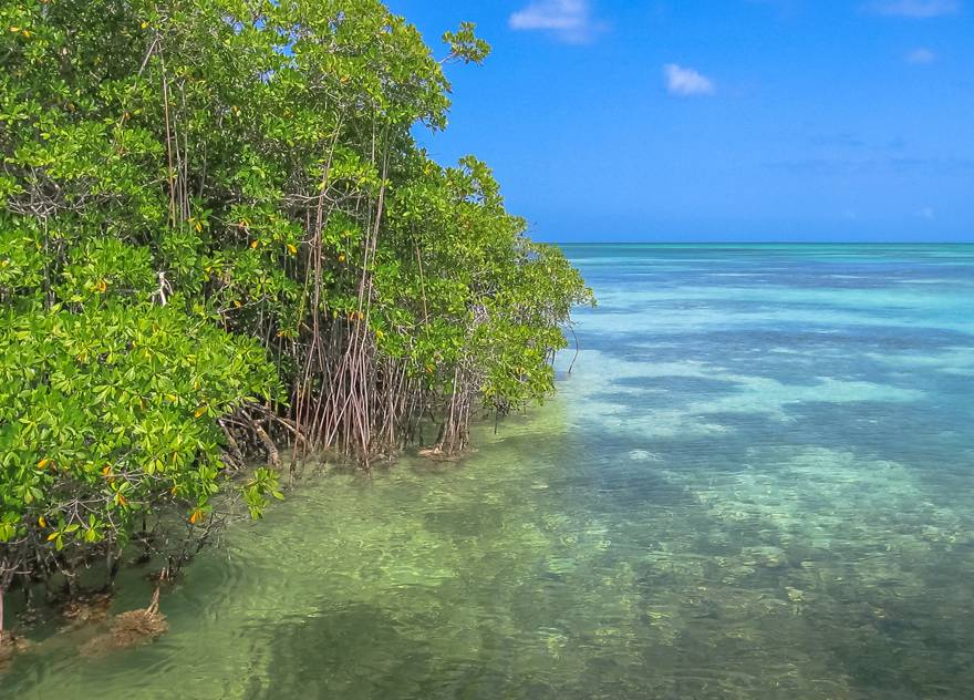 Mangroves on Saona Island