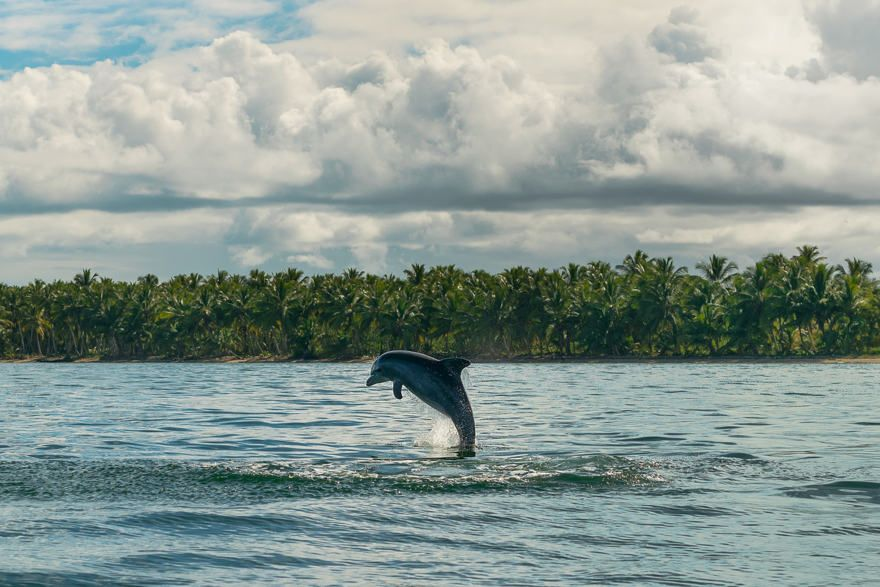 Delfines en el mar caribe