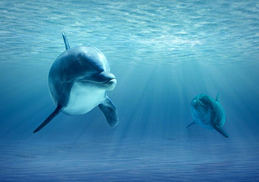Delfines en Punta Cana