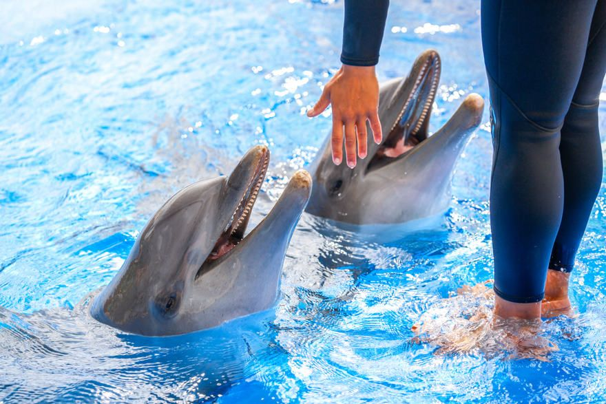 Medidas de seguridad para nadar con delfines