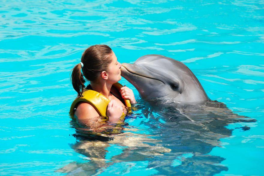 Nager avec les dauphins à Punta Cana